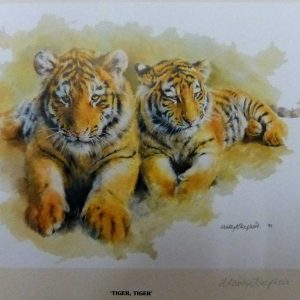 Buy this tiger print by Mandy Shepherd in aid of conservation