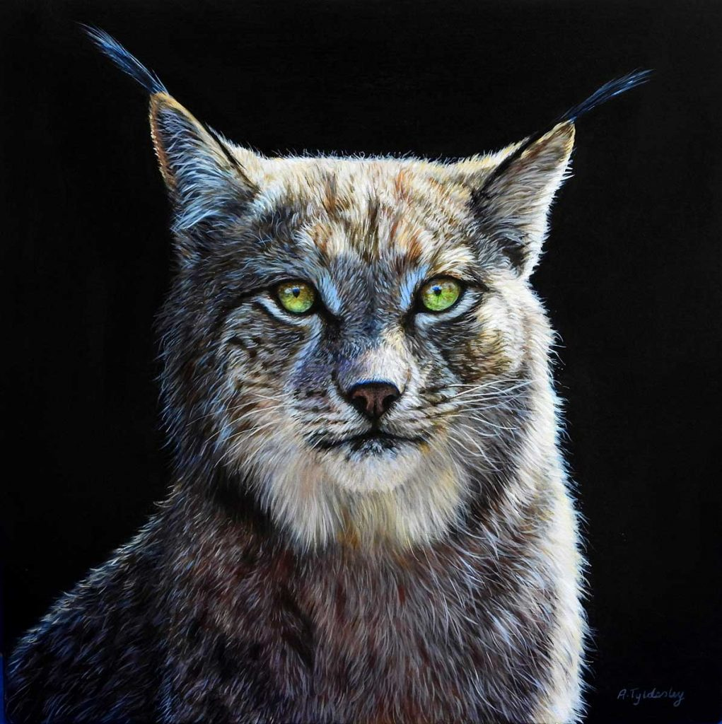 acrylic artwork of lynx by artist Amber Tydesley