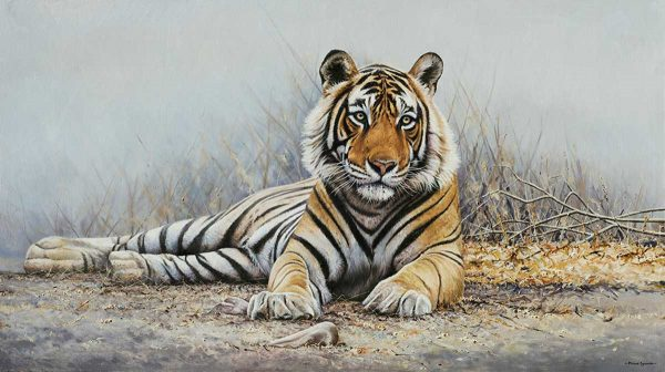 Buy this print by Richard Symonds in aid of conservation