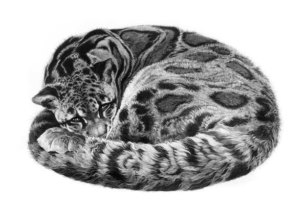 Buy this limited edition print by Gary Hodges in aid of conservation.