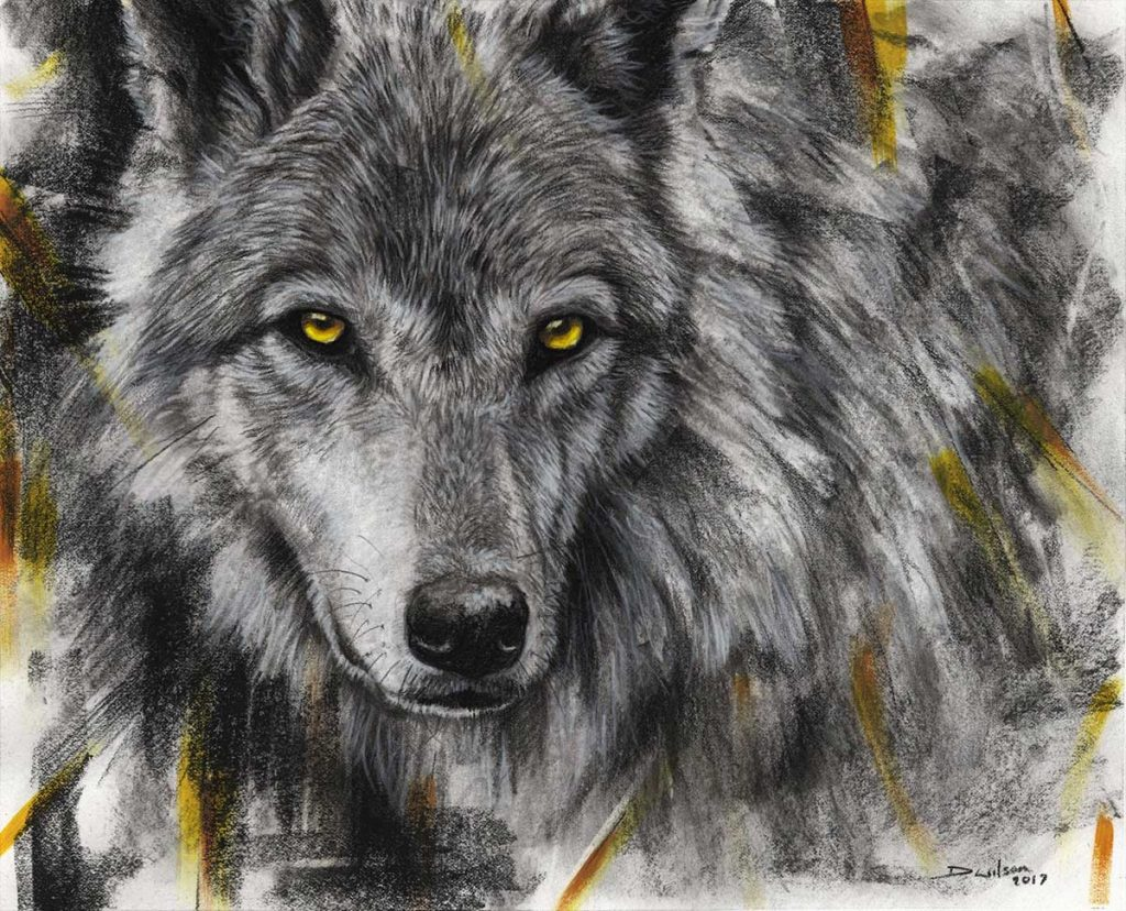 drawing of a wolf by david wilson