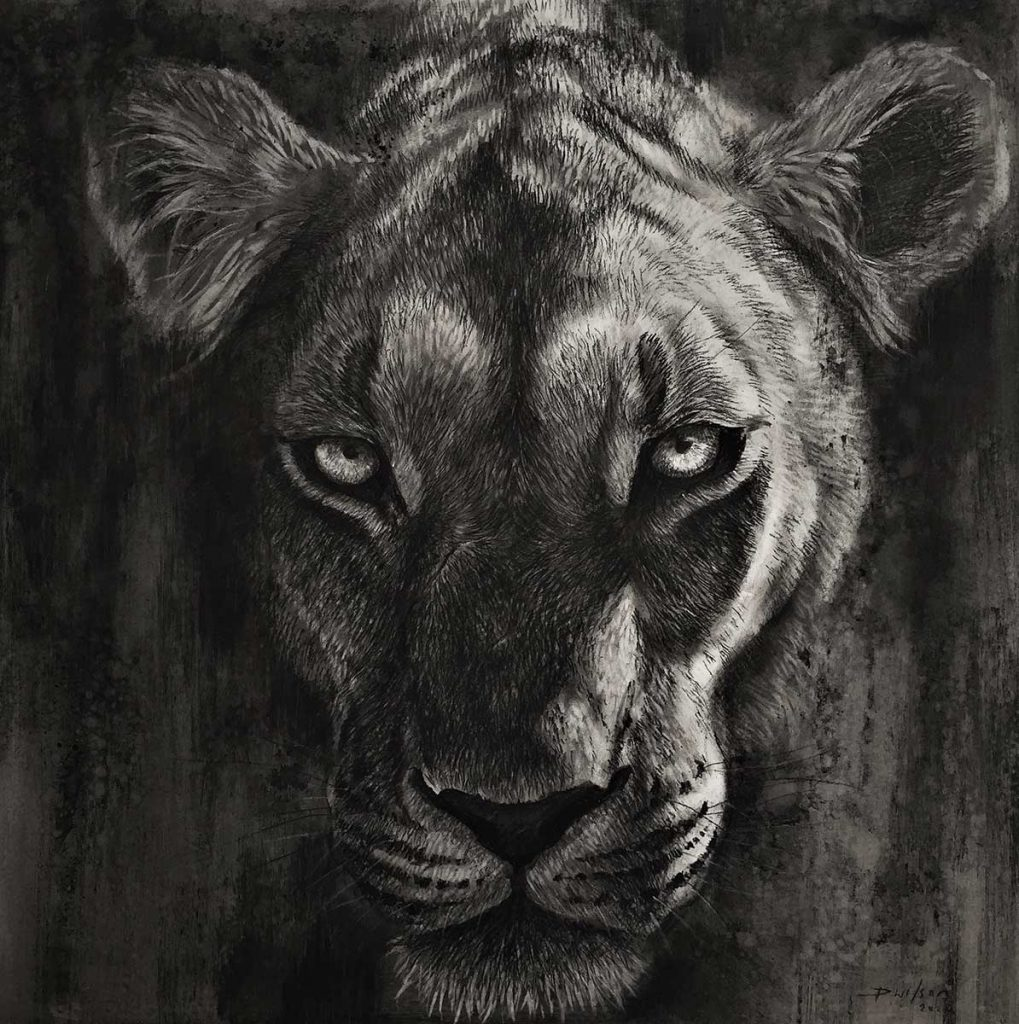 charcoal drawing of a lion by artist Dan Wilson for sale via DSWF online shop