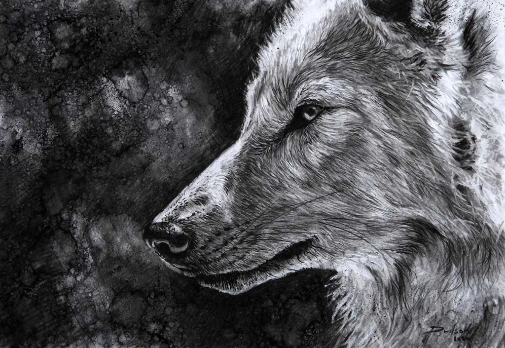 wold charcoal drawing by david wilson