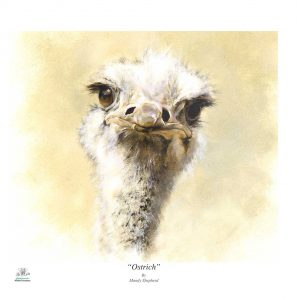 Buy this Ostrich print in aid of conservation