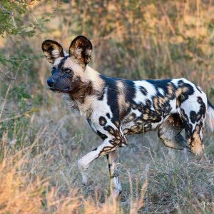 colourful painted dog