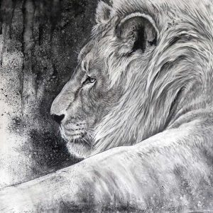 charcoal drawing of a lion