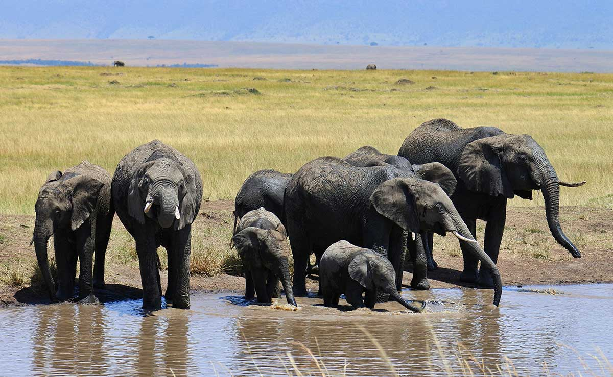 a herd of elephants drinking at a waterhole