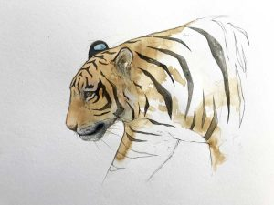 tiger coffee painting