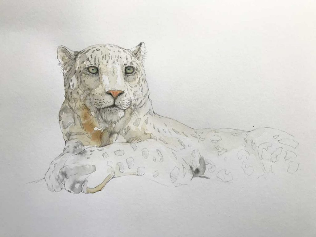 Buy this original by Stephen Rew in aid of conservation