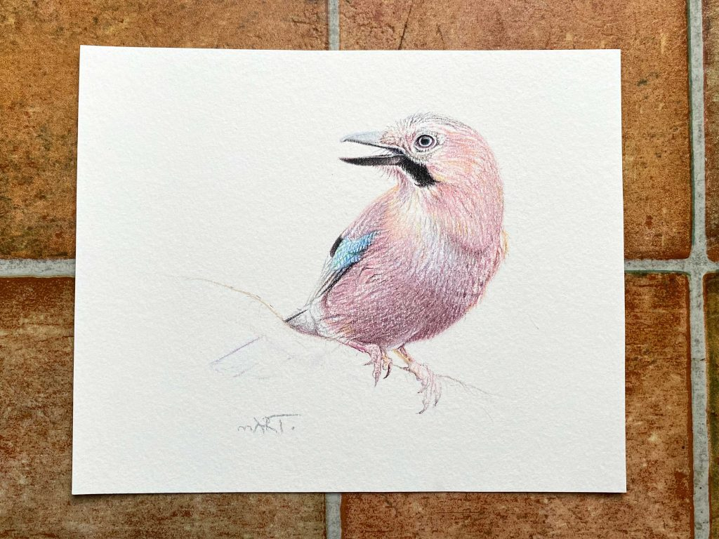Buy this Jay original by Martin Aveling in aid of conservation