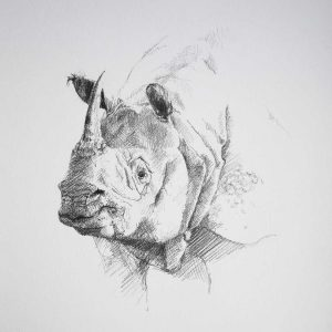 graphite sketch of indian rhino
