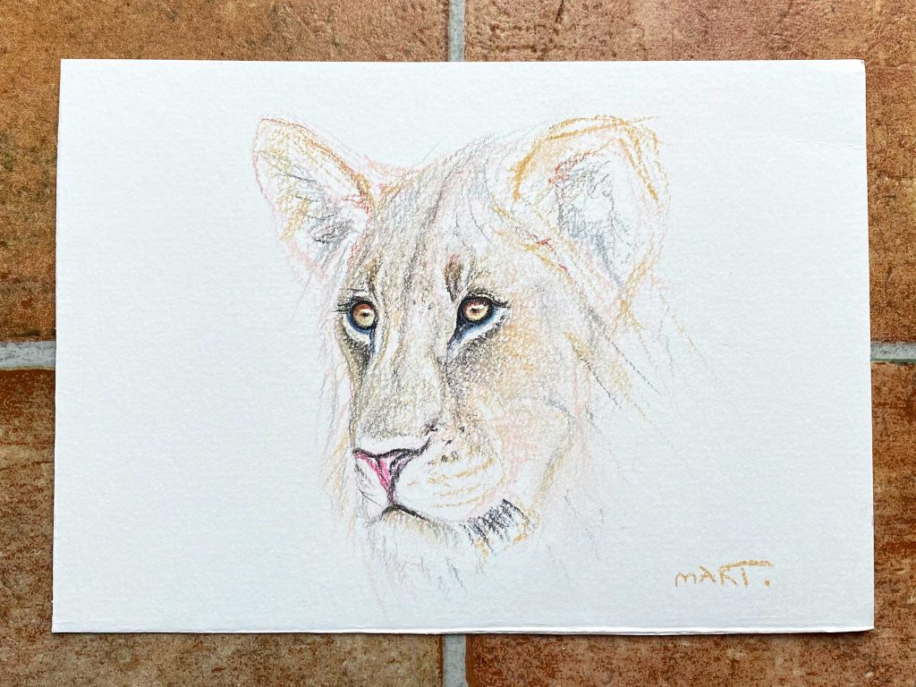 Buy this lioness by Martin Aveling in aid of conservation