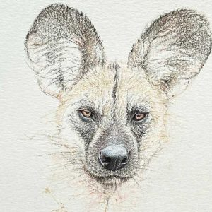 Buy this Painted Dog by Martin Aveling in aid of conservation