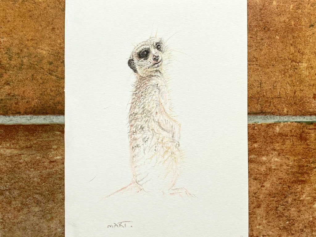 Buy this meerkat by Martin Aveling in aid of conservation