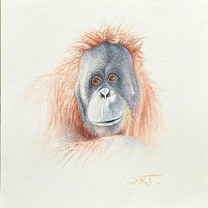 Buy this Orangutan by Martin Aveling in aid of conservation