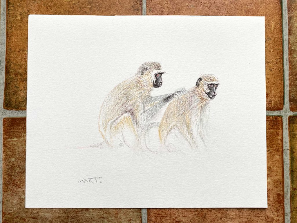 Buy these vervet monkeys by Martin Aveling in aid of conservation