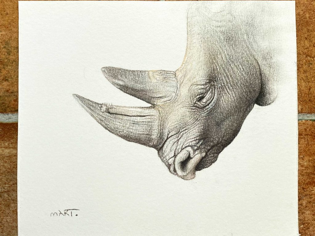 Buy this Black Rhino original by Martin Aveling in aid of conservation