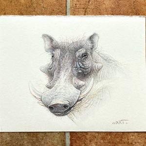 Buy this warthog by Martin Aveling in aid of conservation