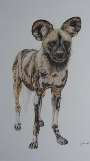 Buy this original by Sarah Lawson in aid of conservation