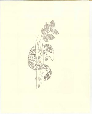 Buy this etching by Jack in aid of conservation