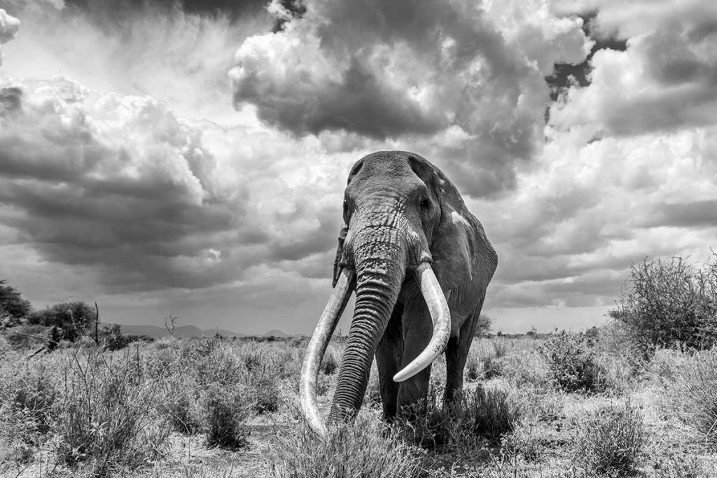 a dramatic black and white photograph of an elephant