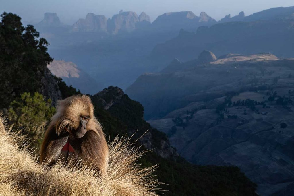 a monkey sat over looking a mountain