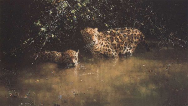 Buy this print by David in aid of conservation