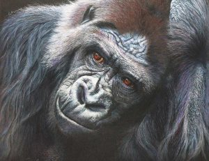 Buy this print by Leslie in aid of conservation