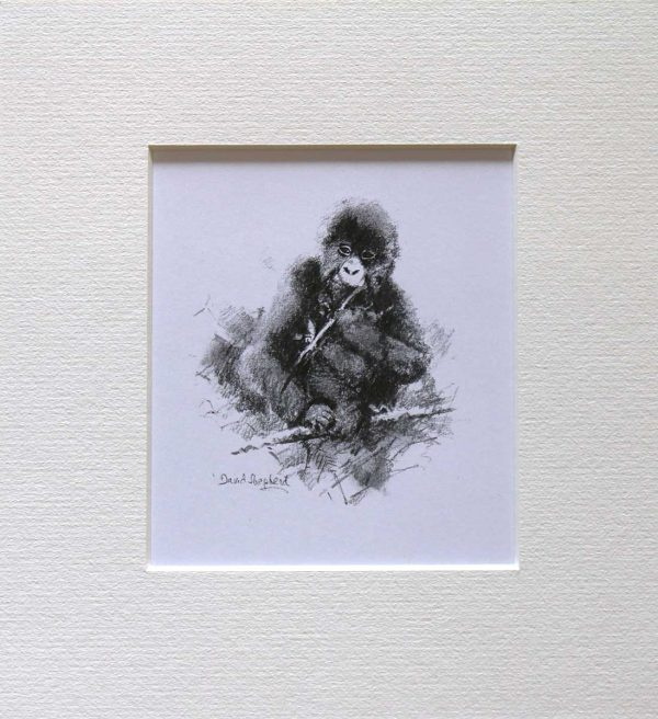 Buy this sketch by David in aid of conservation