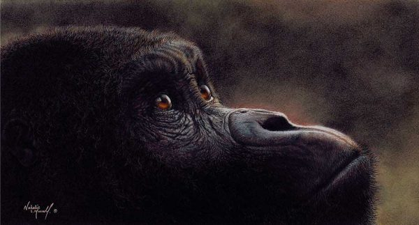 Buy this print by Natalie in aid of conservation