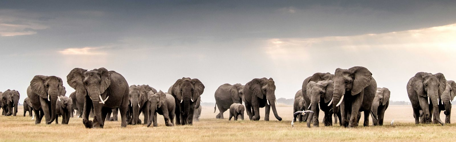 elephant herd photograph by william fortescue