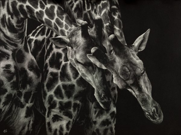 Survival of the fittest giraffes artwork by Amy Stauffer