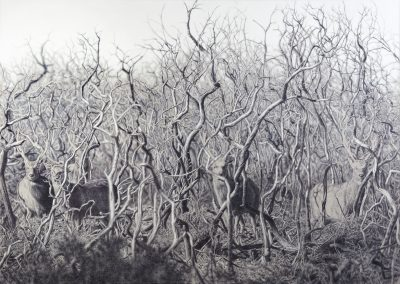 Art Work by Cy Baker titled New Forest Deer