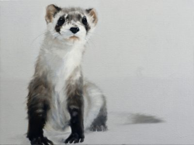 A painting of a black foot ferret by Doyle Hoststetler