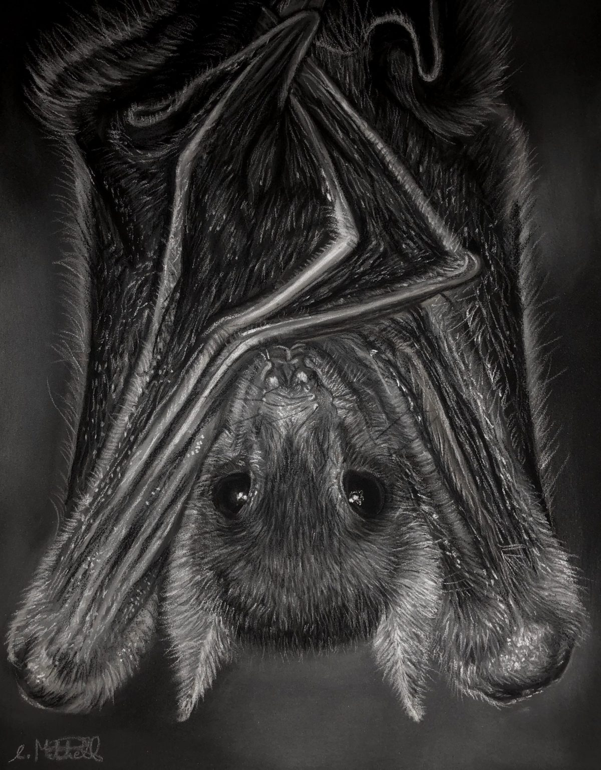 An image of a fruit bat by Eilidh Mitchell