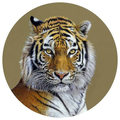 A painting by Emily Pooley of a tiger