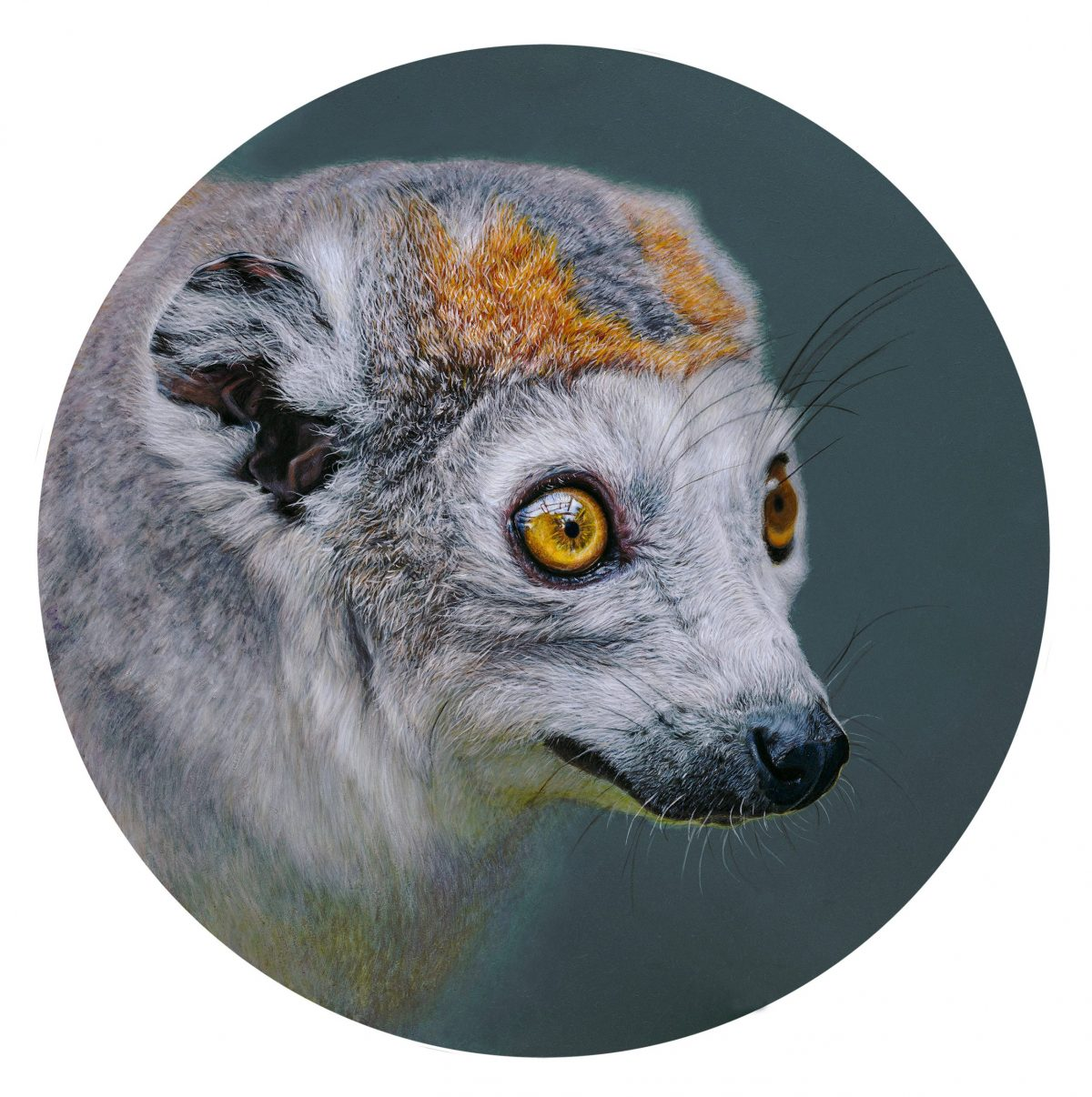 Painting by Emily Pooley of a lemur