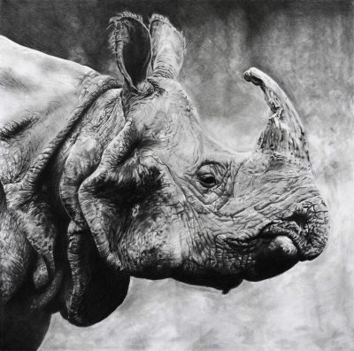 Painting of a rhino by Emma Price