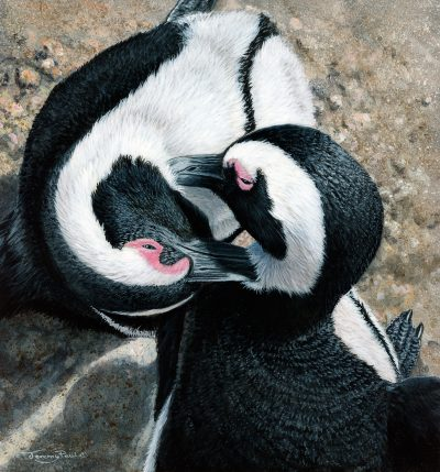 A painting by Jeremy Paul called Allopreening South African Penguins