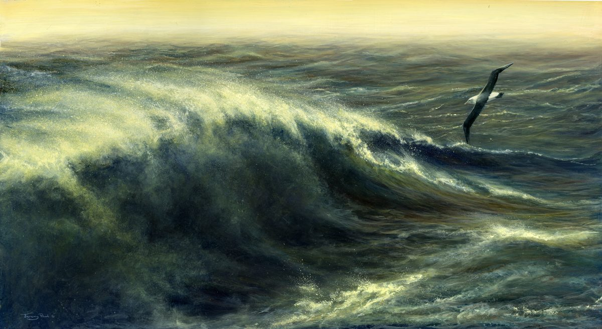 A painting by Jeremy Paul called On the Wind - Shy Albatross