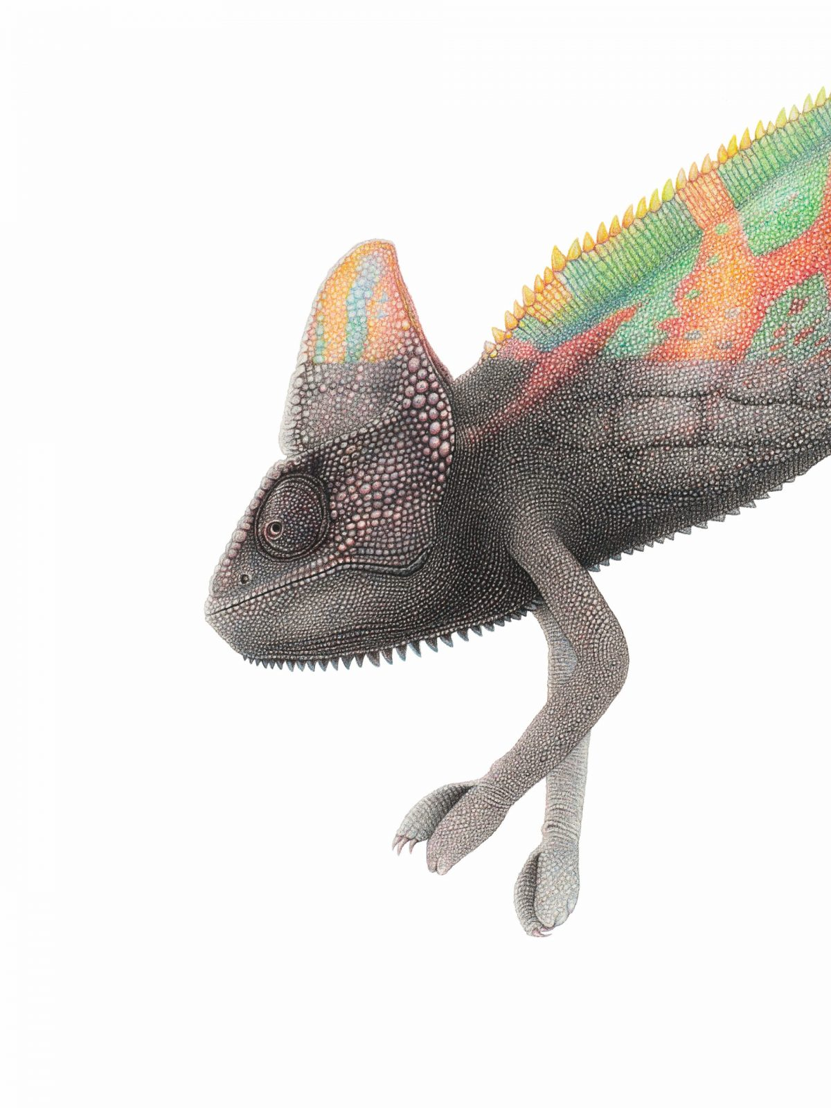 pastel drawing of a chameleon turning into concrete