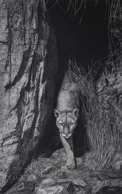 charcoal drawing of a puma emerging from a cave