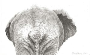 A postcard size drawing of an elephant's rear end
