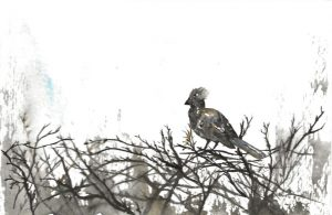 A postcard size painting of a Go Away Bird