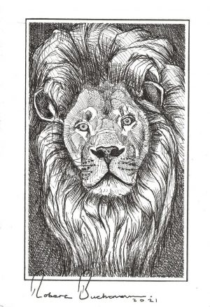 A postcard size drawing of a male lion's head