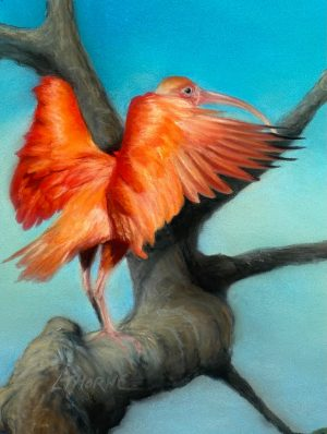 A postcard size drawing of a Scarlet Ibis