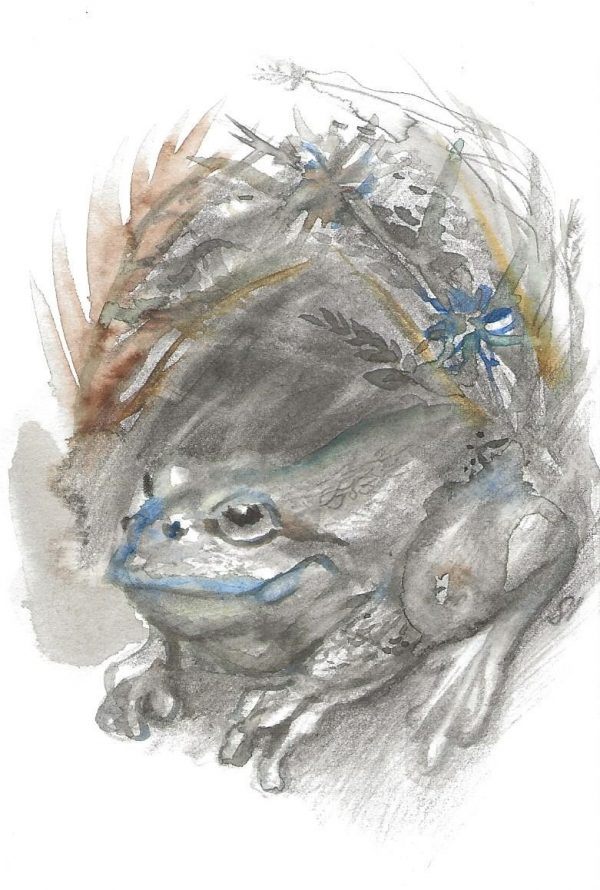 A postcard size watercolour painting of a toad