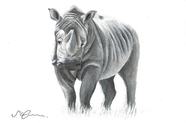 A postcard size pencil drawing of a rhino