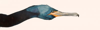 Painting by Remy Sant titled Great Cormoran