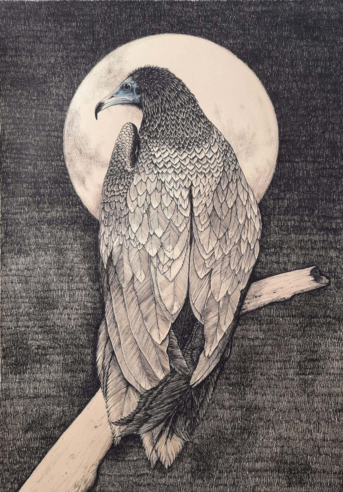 Art work by Sara Polini titled Egyptian Vulture